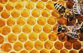 panel de abeja